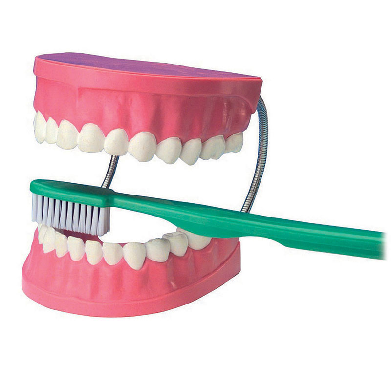 Giant Dental Care Model - CD03089