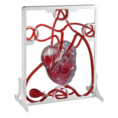 Pumping Heart Model - CD03017
