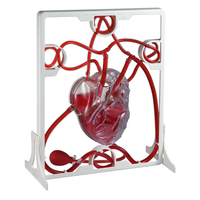 Pumping Heart Model - CD03017