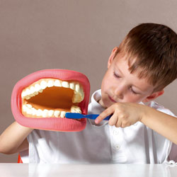Giant Teeth Dental Demonstration Model