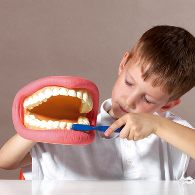 Giant Teeth Dental Demonstration Model - CD03083