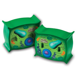Soft Foam Cross-Section Plant Cell - by Learning Resources