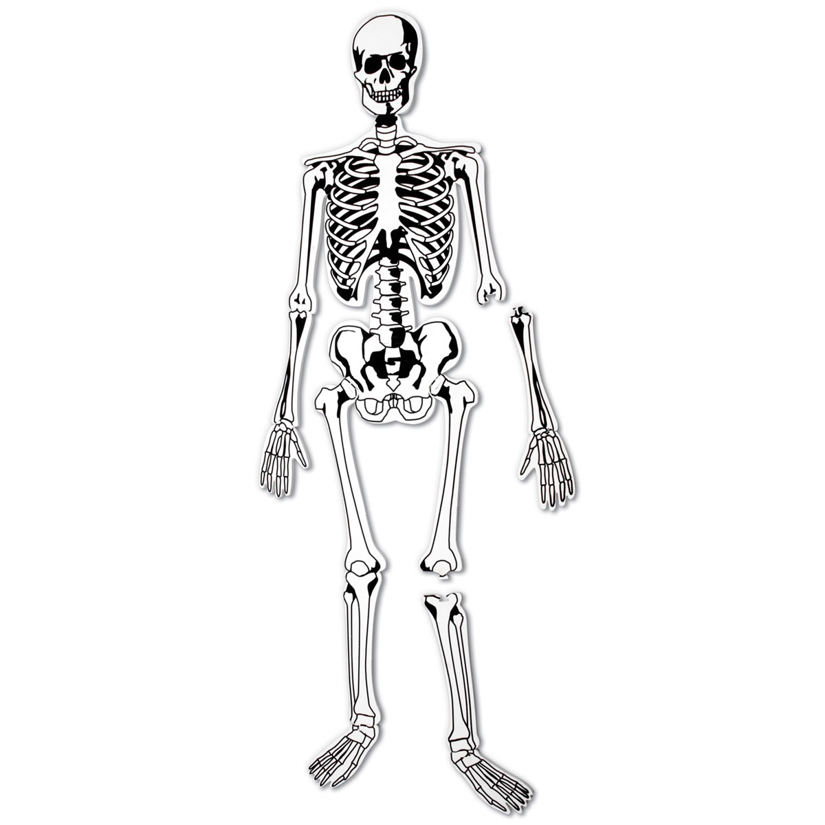 It is a photo of Unusual Life Size Printable Skeleton
