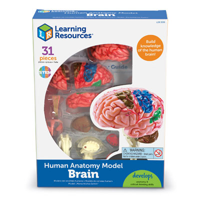 Brain Model  - by Learning Resources - LER3335