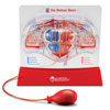 Pumping Heart Model - by Learning Resources - LER3535