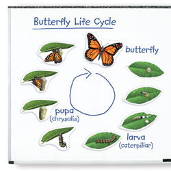 Giant Magnetic Butterfly Life Cycle Demonstration Set - by Learning Resources