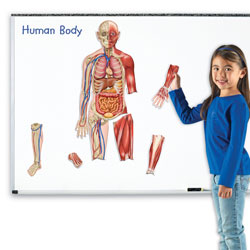 Double Sided Giant Magnetic Human Body Demonstration Set - by Learning Resources