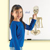 Double Sided Giant Magnetic Human Body Demonstration Set - by Learning Resources - LER6044