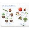 Giant Magnetic Plant Life Cycle Demonstration Set - by Learning Resources - LER6045