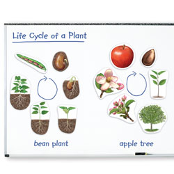 Giant Magnetic Plant Life Cycle Demonstration Set - by Learning Resources